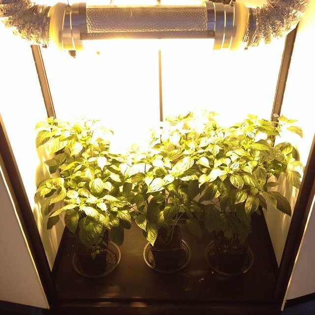 best grow box for beginners
