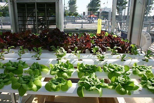 Best Hydroponic Systems Review
